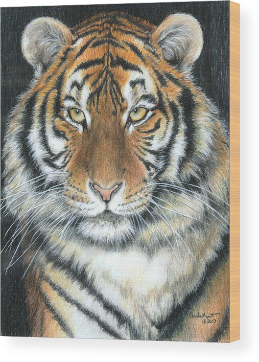 Tiger Wood Print featuring the drawing Songha by Carla Kurt