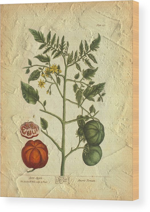 Tomato Wood Print featuring the photograph Tomato Plant Vintage Botanical by Karla Beatty