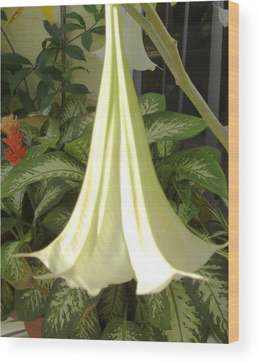 Floral Wood Print featuring the photograph Trumpet Lily by Frederic Kohli