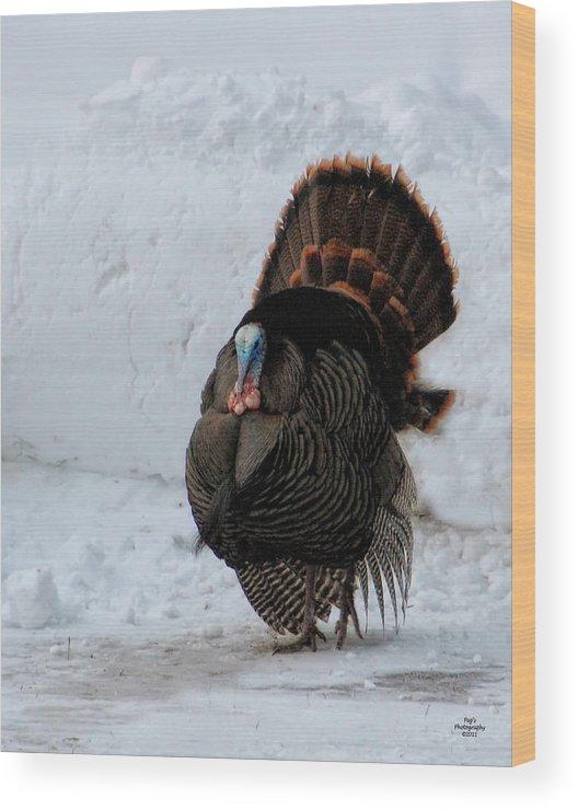 Wild Turkey Wood Print featuring the photograph Wild Tom Turkey In Winter by Peg Runyan