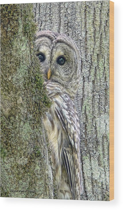 Owl Wood Print featuring the photograph Barred Owl Peek A Boo by Jennie Marie Schell