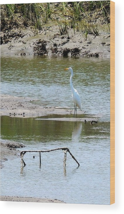 Marsh Wood Print featuring the photograph Egret At Low Tide by Terry Cobb