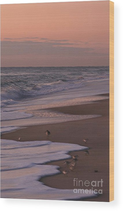 Beach Wood Print featuring the photograph Morning Birds At The Beach by Nadine Rippelmeyer