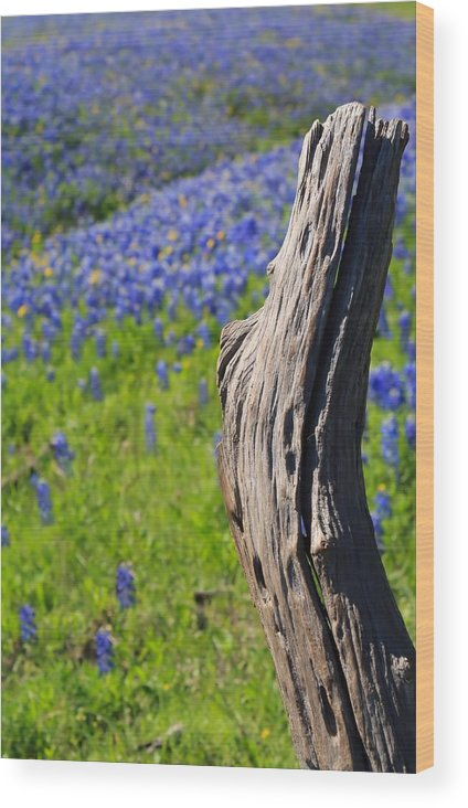 Stump Wood Print featuring the photograph A Different Perspective by Lynnette Johns