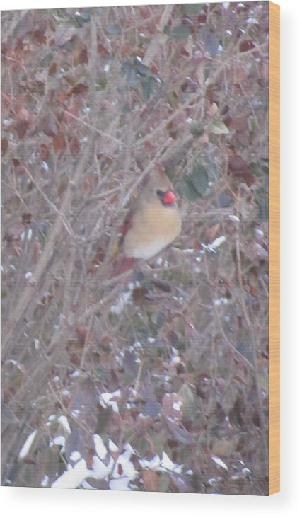 Female Cardinal In Winter Wood Print featuring the photograph Cardinal Colorful Covers by Carol Lloyd