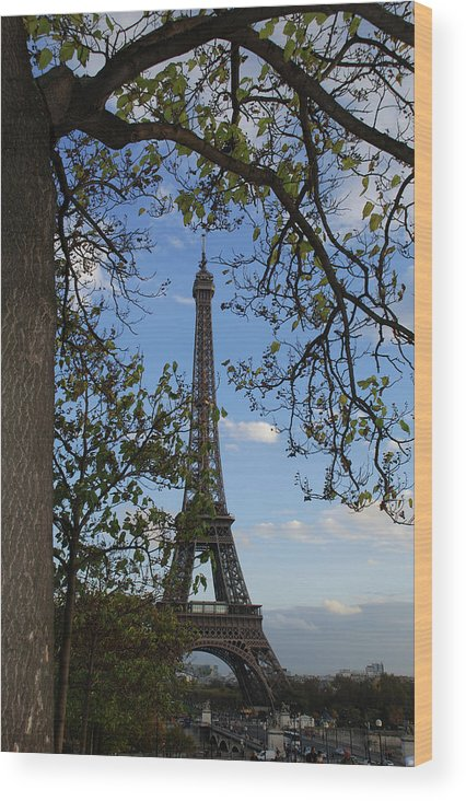 Eiffel Tower Wood Print featuring the photograph Eiffel Tower Tree by Chris Rigamer