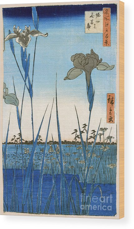 1857 Wood Print featuring the photograph Japan: Iris Garden, 1857 by Granger