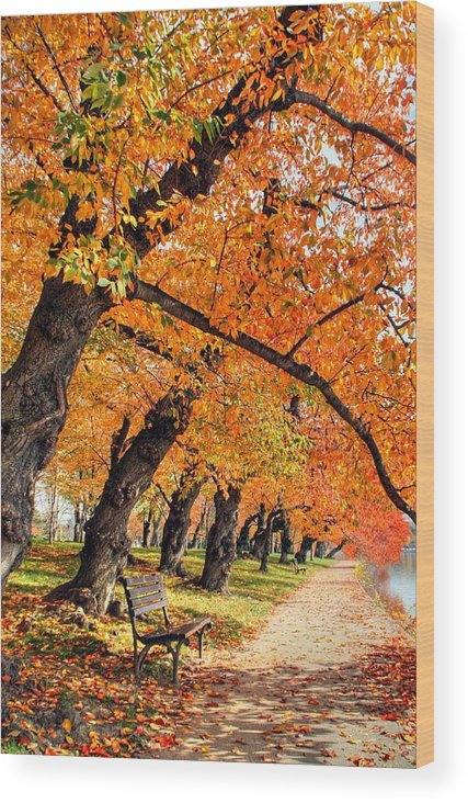 Autumn Wood Print featuring the photograph Mute Appeal by Mitch Cat