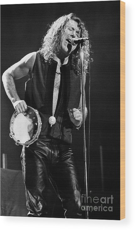 Robert Plant Wood Print featuring the photograph Robert Plant-0062 by Timothy Bischoff