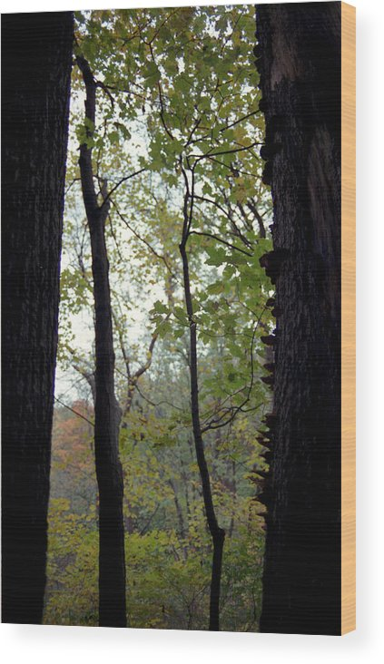 Tree Wood Print featuring the photograph Vertical Limits by Randy Oberg