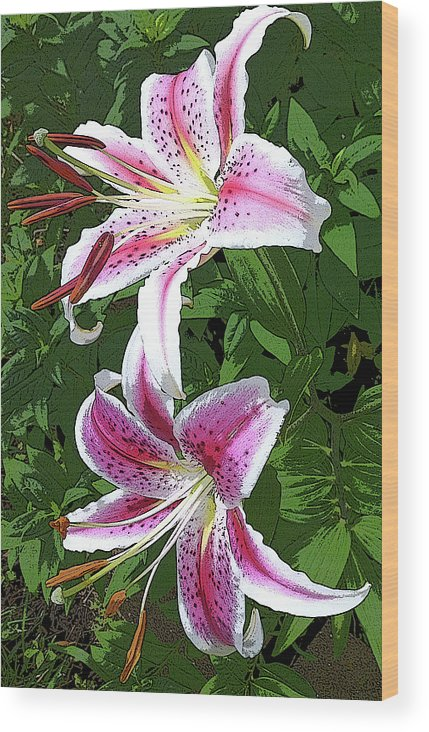 Lilly Wood Print featuring the photograph White Lillies 2 by Mark Compton