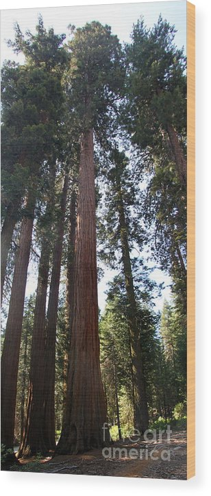 Sequoia Grove Wood Print featuring the photograph Giant Sequoias - Yosemite Park by Christiane Schulze Art And Photography