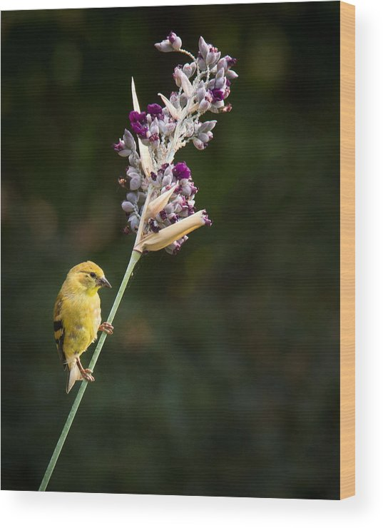 Bird Wood Print featuring the photograph Balancing Act by Jean Noren