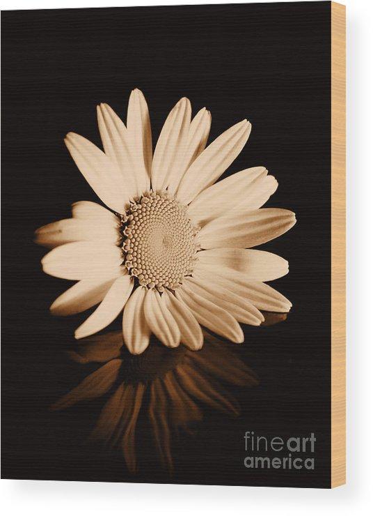 Albumen Wood Print featuring the photograph Albumen Daisy by Brian Raggatt