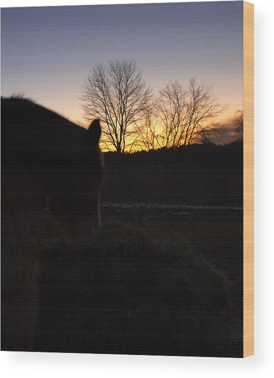 Horse Wood Print featuring the photograph Bse45 by Karen Morang