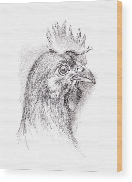 Chicken Wood Print featuring the drawing Chicken Portrait In Charcoal by MM Anderson