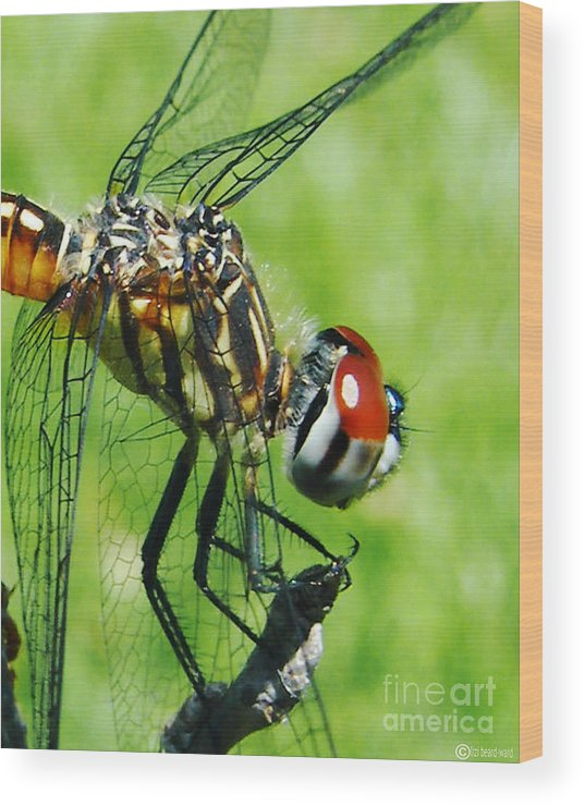 Dragonfly Wood Print featuring the photograph Dragonfly by Lizi Beard-Ward