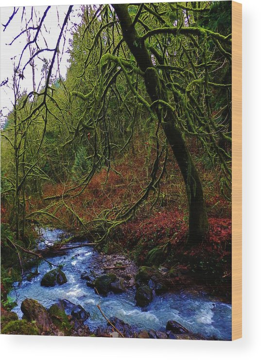Nature Wood Print featuring the photograph Embracing The Earth by Charles Lucas