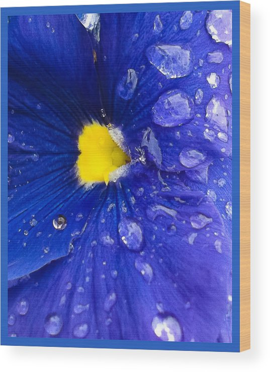Blue Wood Print featuring the photograph Just Watered by Michael Walton