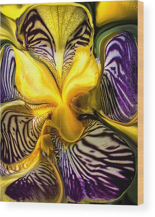 Orchid Wood Print featuring the photograph Liquified Orchid by Diana Powell
