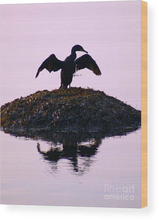Bird Wood Print featuring the photograph Morning Stretch by Joe Geraci