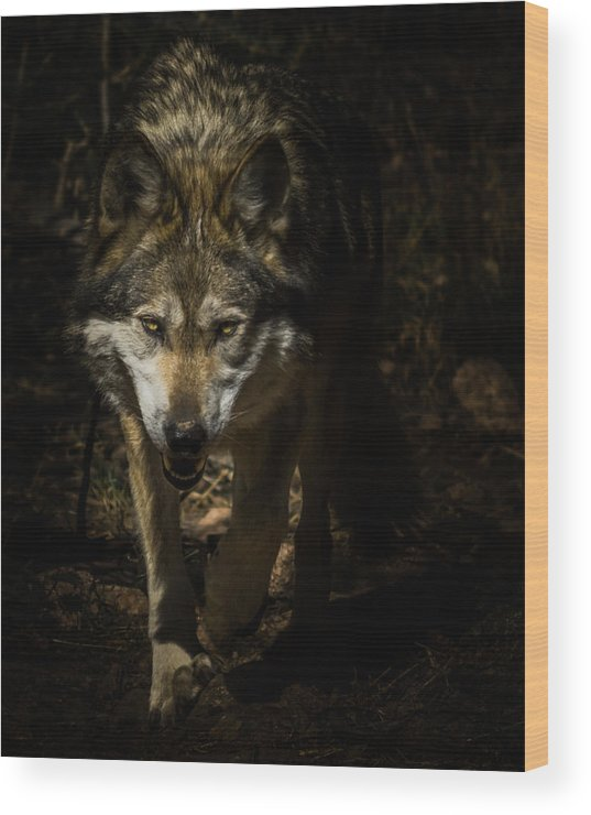 Wolf Wood Print featuring the photograph Out Of The Dark by Ernie Echols
