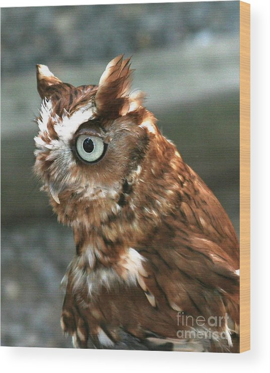 Owl Wood Print featuring the photograph Says Who? by George DeLisle