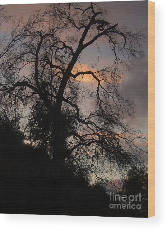 Nature Wood Print featuring the photograph Shadowlands 5 by Peter Awax