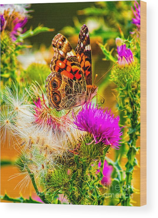 Animal Wood Print featuring the photograph Skyline Butterfly by Nick Zelinsky