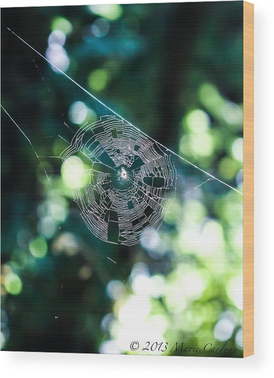 Wood Print featuring the photograph Spider Web by Marie Cardona