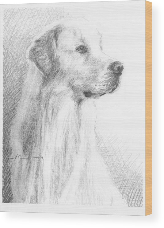 <a Href=http://miketheuer.com Target =_blank>www.miketheuer.com</a> Yellow Labrador Show Dog Pencil Portrait Wood Print featuring the drawing Yellow Labrador Show Dog Pencil Portrait by Mike Theuer