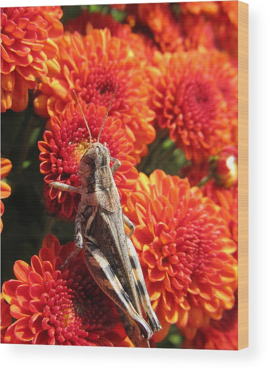 Grasshopper Wood Print featuring the photograph Grasshopper by Michele Caporaso