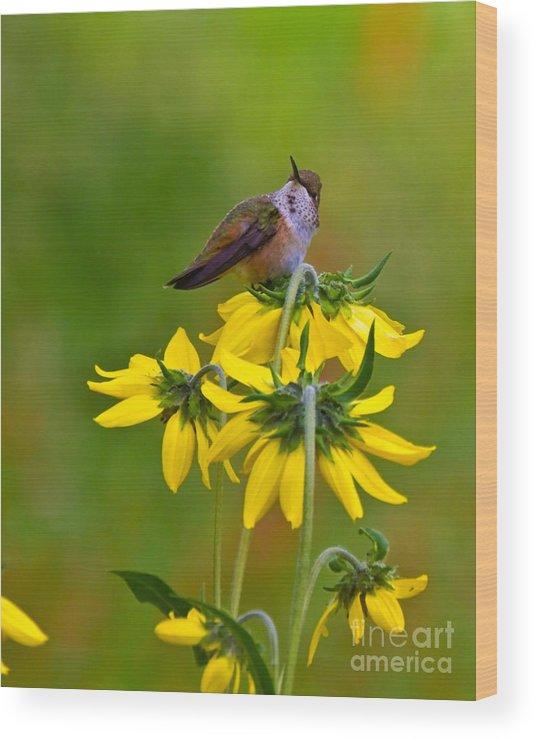 Air Wood Print featuring the photograph Rufous Hummingbird by Crystal Garner