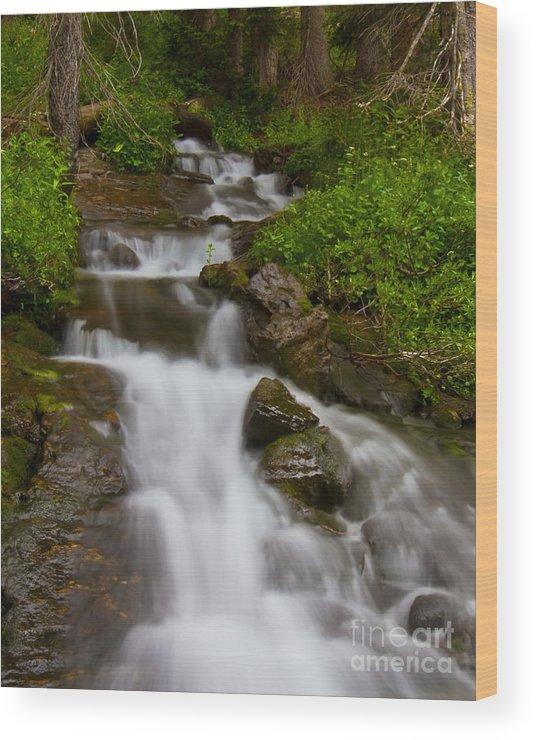 Aquatic Wood Print featuring the photograph Crystal Cascades by Crystal Garner