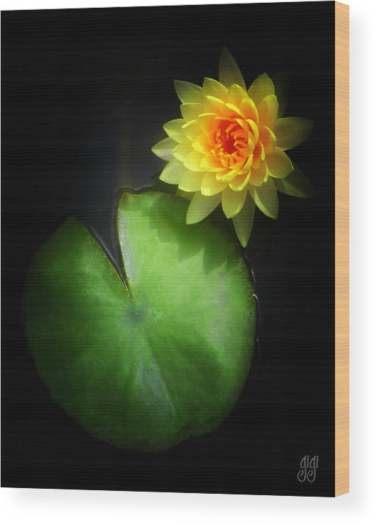 Lotus Wood Print featuring the photograph Must Be Love by Keren Candiotti