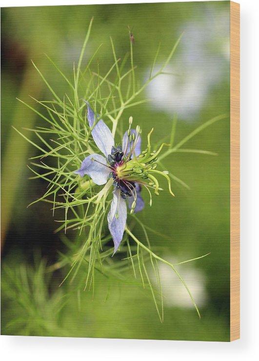 Nigella Wood Print featuring the photograph Nigella Flower by Shiladitya Sinha