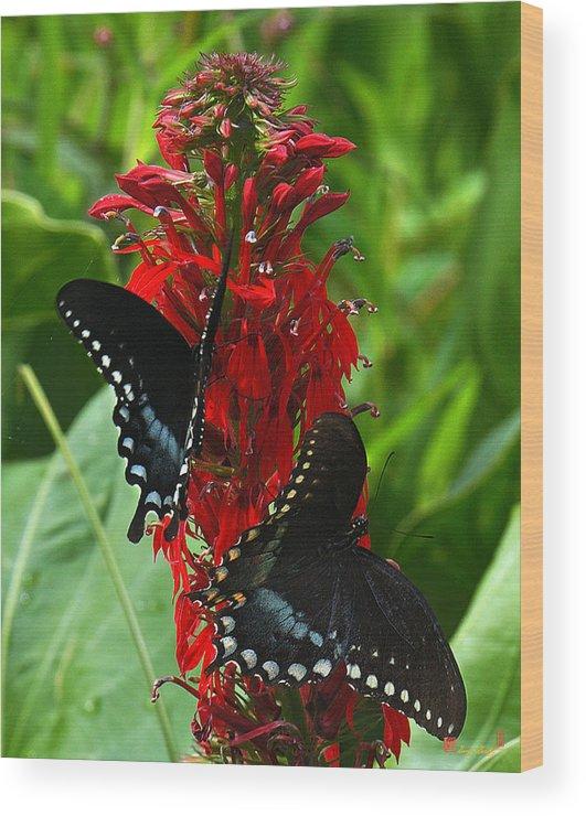 Ure Wood Print featuring the photograph Spicebush Swallowtails Visiting Cardinal Lobelia Din041 by Gerry Gantt