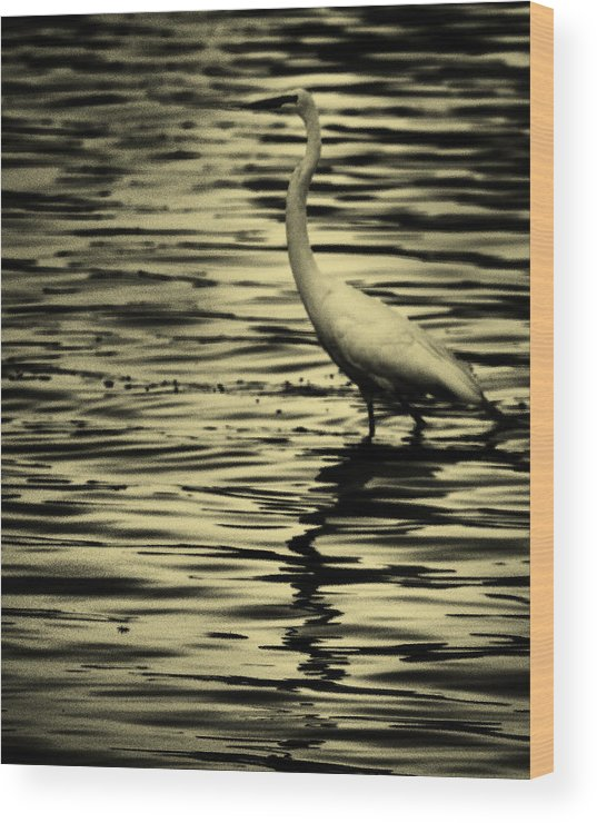 White Crane Wood Print featuring the photograph White Crane by Roger Wedegis