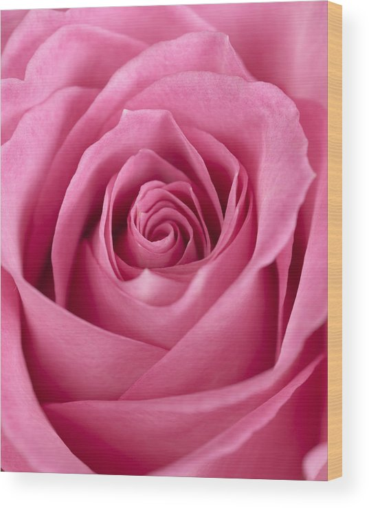Rose Wood Print featuring the photograph Rose by Jessica Wakefield