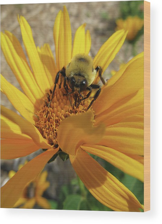 Flowers Wood Print featuring the photograph Bee by Michele Caporaso