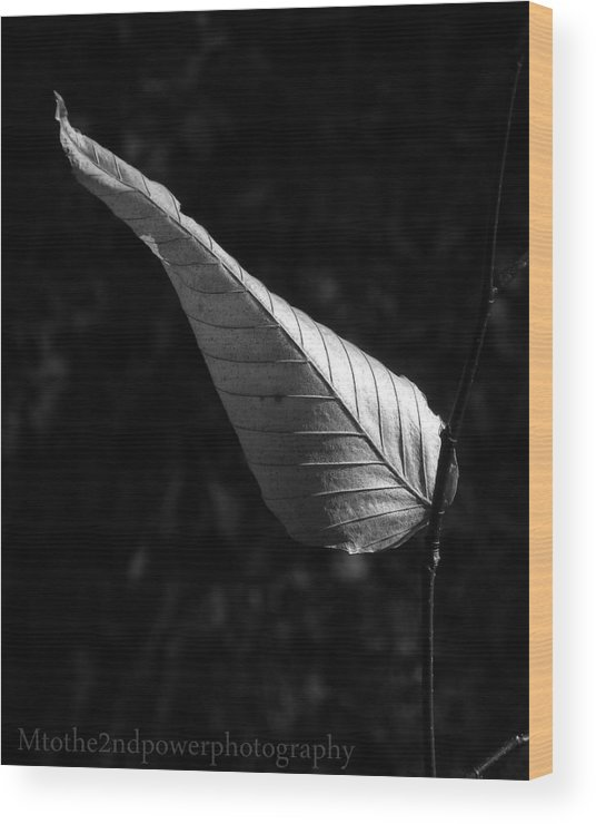 Black & White Wood Print featuring the photograph Balance by Megen McAuliffe