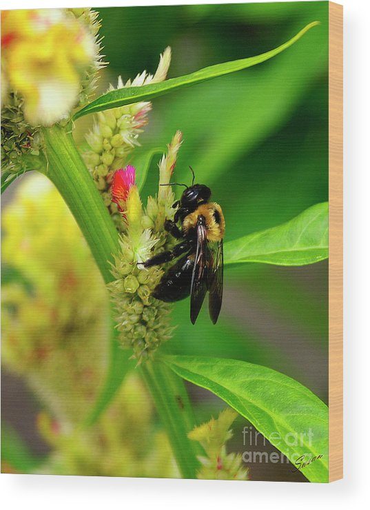Nature Wood Print featuring the photograph Bee On Flower by Susan Cliett
