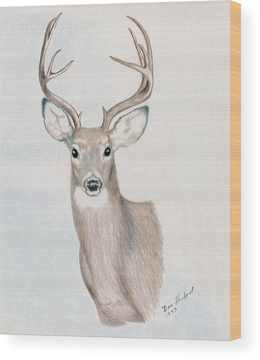 Wildlife Wood Print featuring the drawing Big Buck by Daniel Shuford