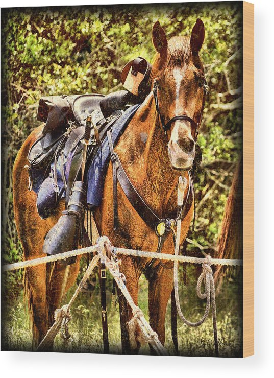 Civil War Wood Print featuring the photograph Cavalry Horse Circa 1864 by Rick Wilkerson
