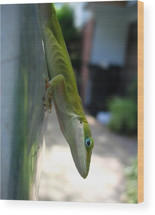 Photograph Wood Print featuring the photograph Emaciated Lizard by Lindsey Orlando