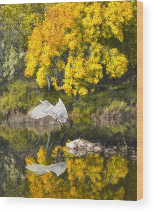 Bird Wood Print featuring the photograph Fall Reflections by Chuck Brittenham