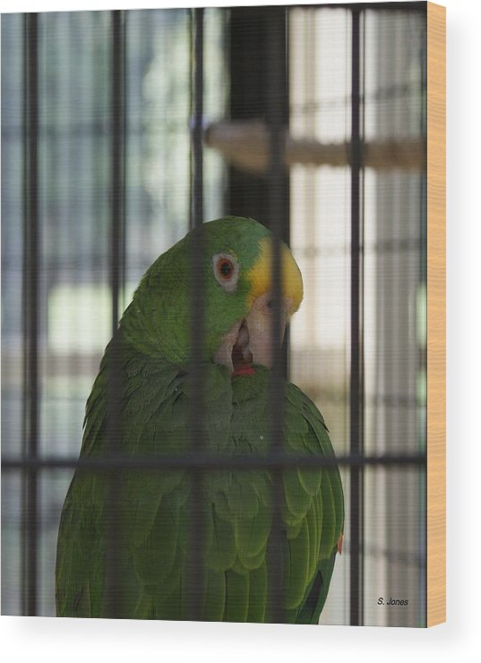 Parrot Wood Print featuring the photograph Framed by Shelley Jones