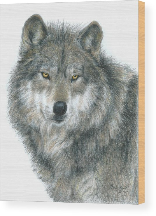 Wolf Wood Print featuring the drawing Haunting Eyes by Carla Kurt