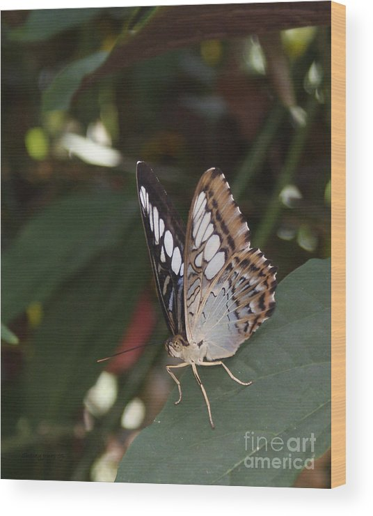Butterfly Wood Print featuring the photograph Hints Of Blue by Shelley Jones
