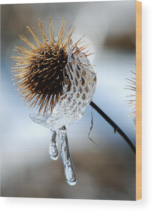 Nature Wood Print featuring the photograph Ice On Burdox by Lisa Kane
